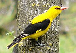 Αυτά τα πουλιά είναι όμορφα και τα